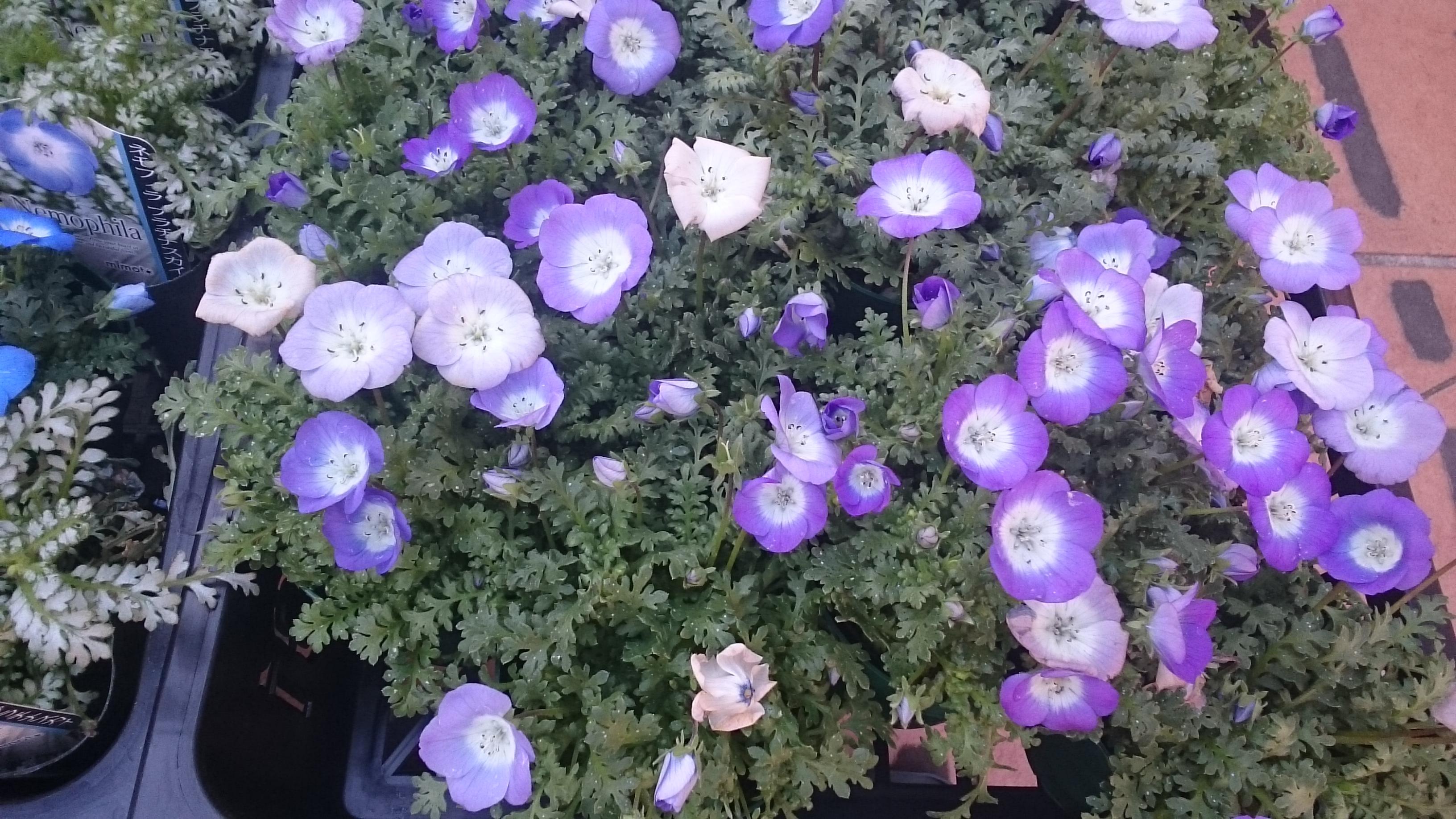 花卉 園芸 川崎